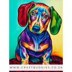 Colourful Dachshund